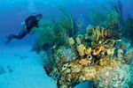 Strandurlaub Bahamas - Charmante Inseln erleben