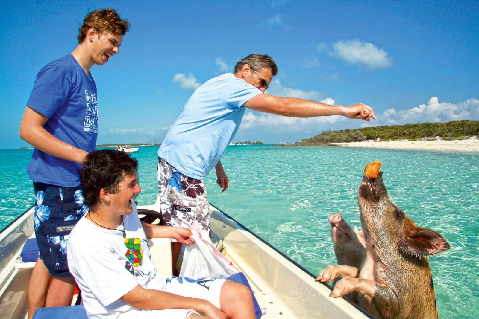 Ausflug zu den schwimmenden Schweinen