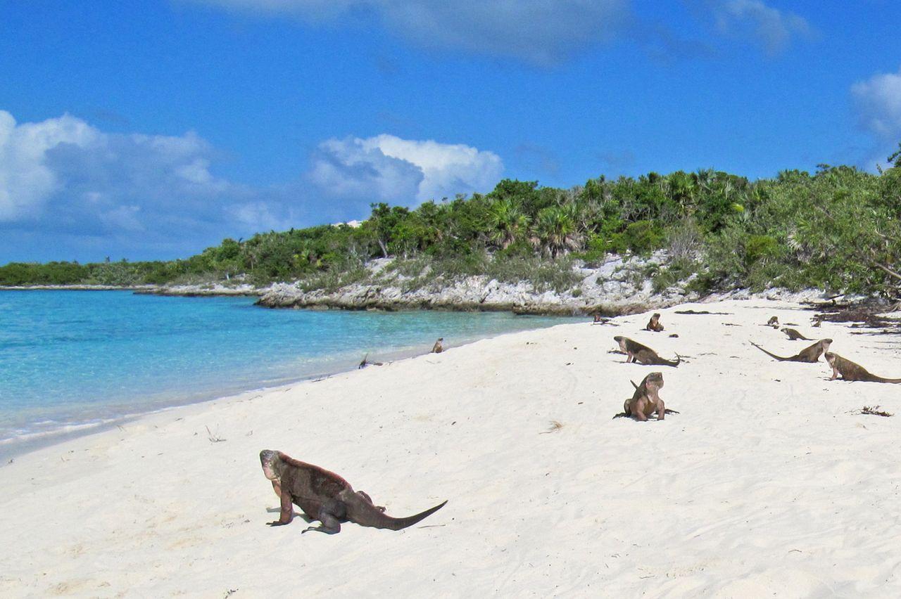Stocking Island Bahamas Hotels
