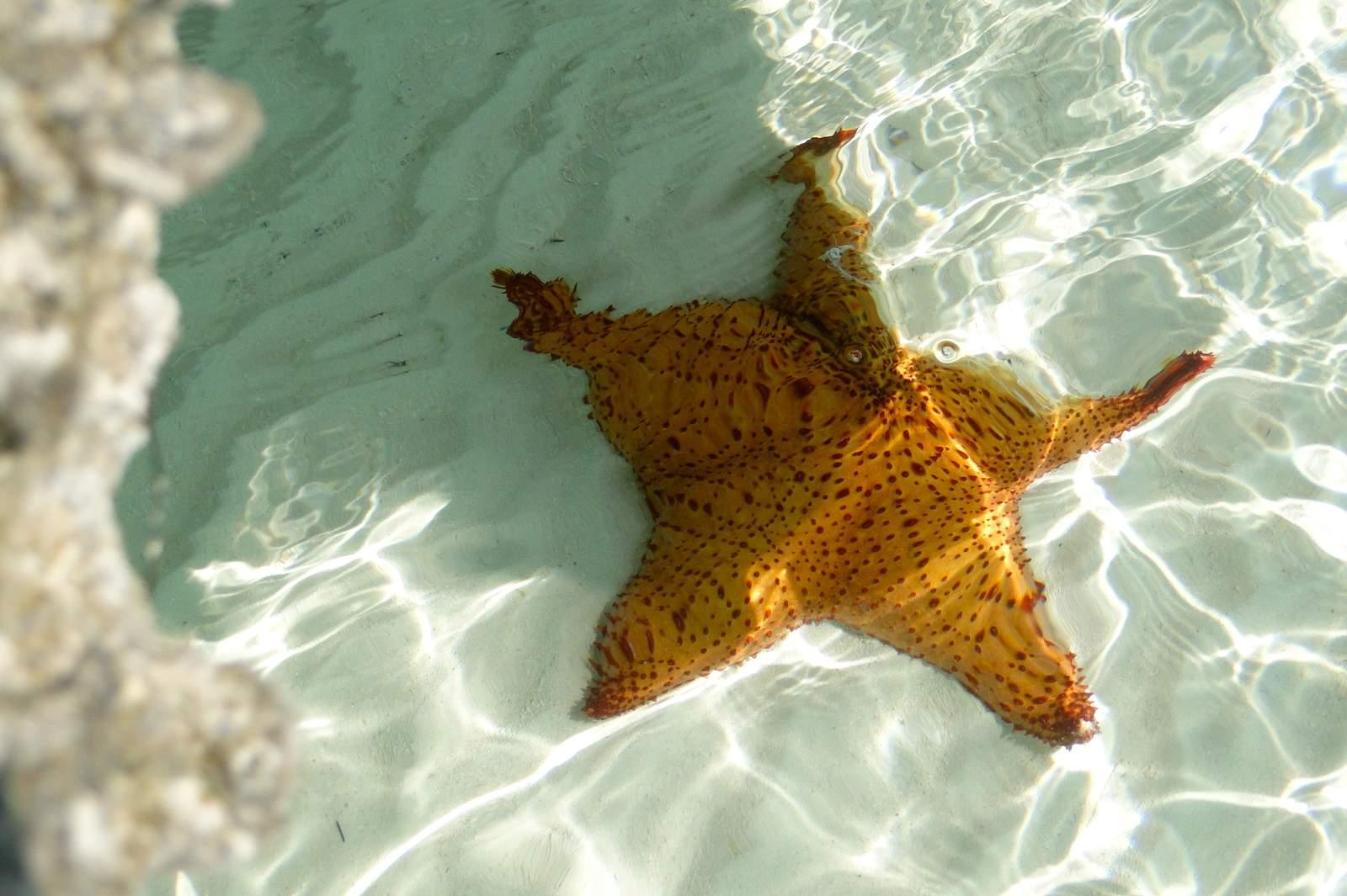 Vielfältige Unterwasserwelt