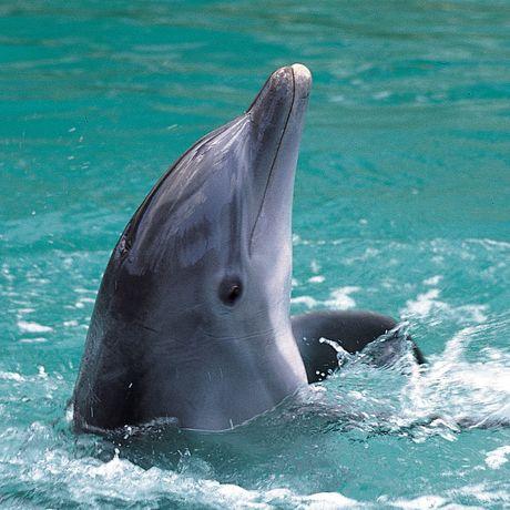 Auf den Bahamas Delfine beobachten