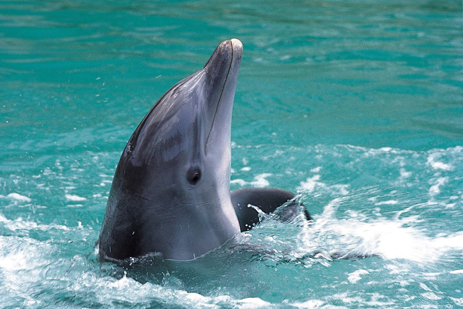 Grand Bahama - hier kann man Delfine erleben