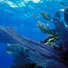Die faszinierende Unterwasserwelt vor der Grand-Bahama Insel