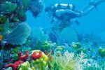 Tauchparadies auf Grand Bahama