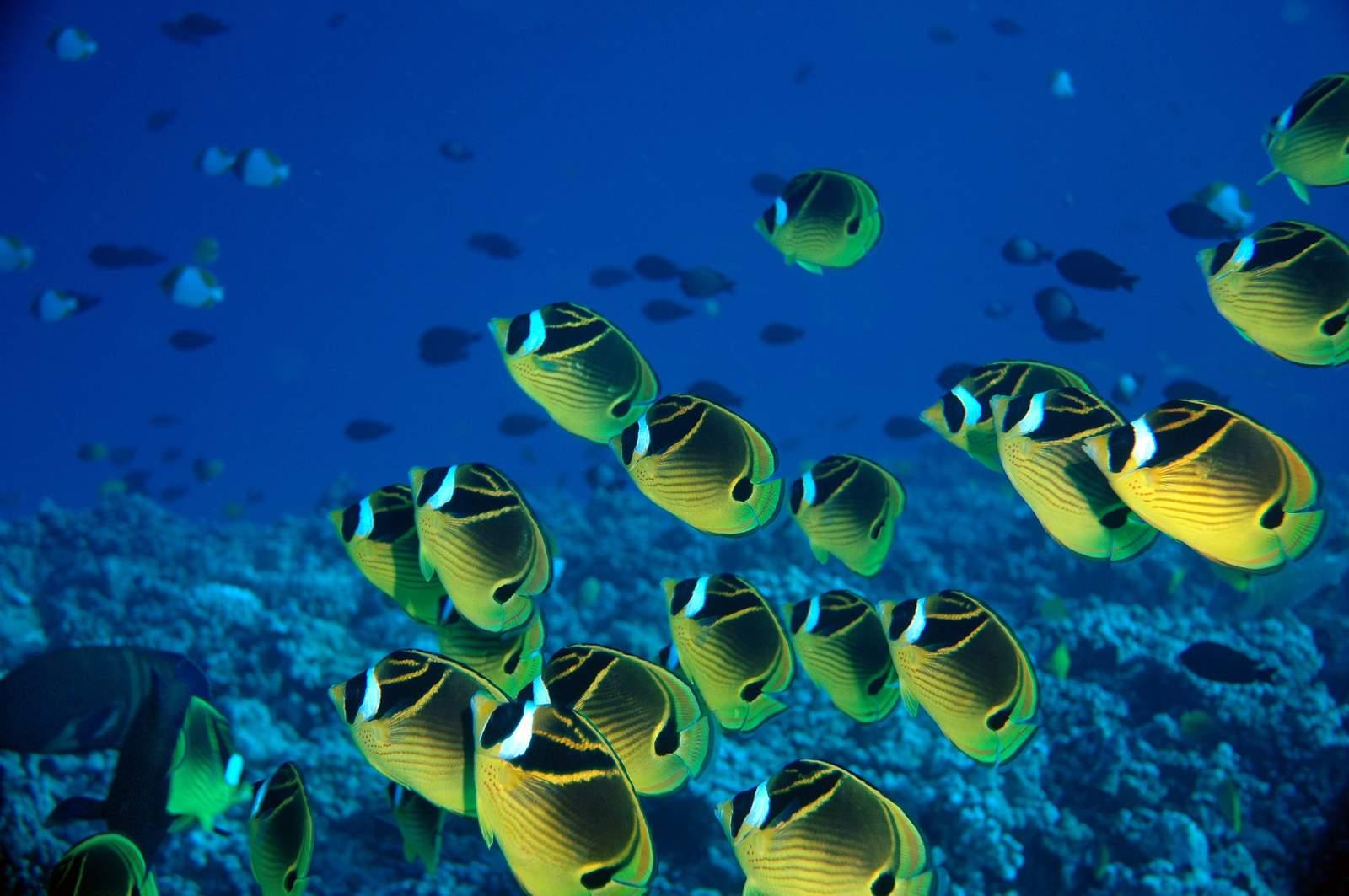 Unterwasserwelt in Hawaii