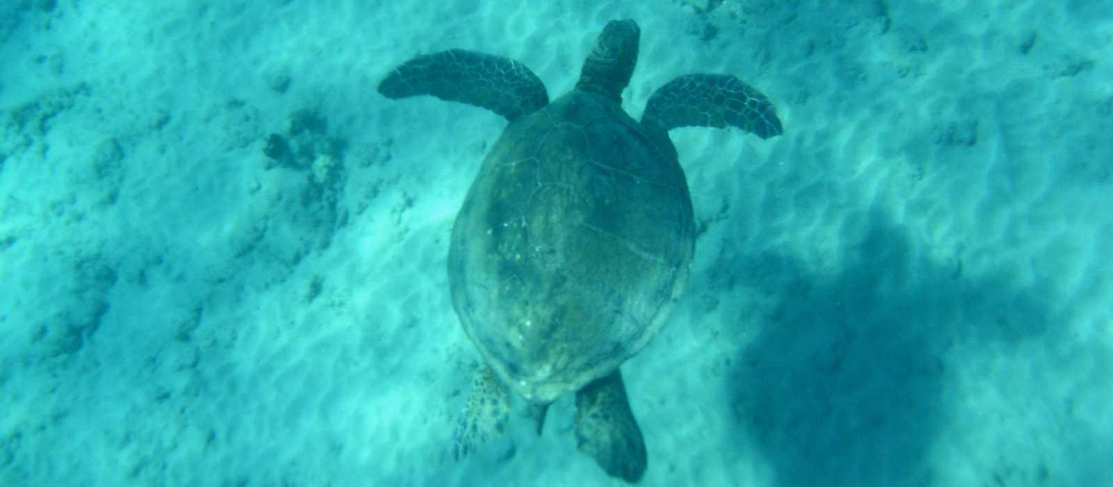 Schildkröte zum Greifen nah