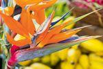 Die leckeren Waimea Fruits von Hawaii