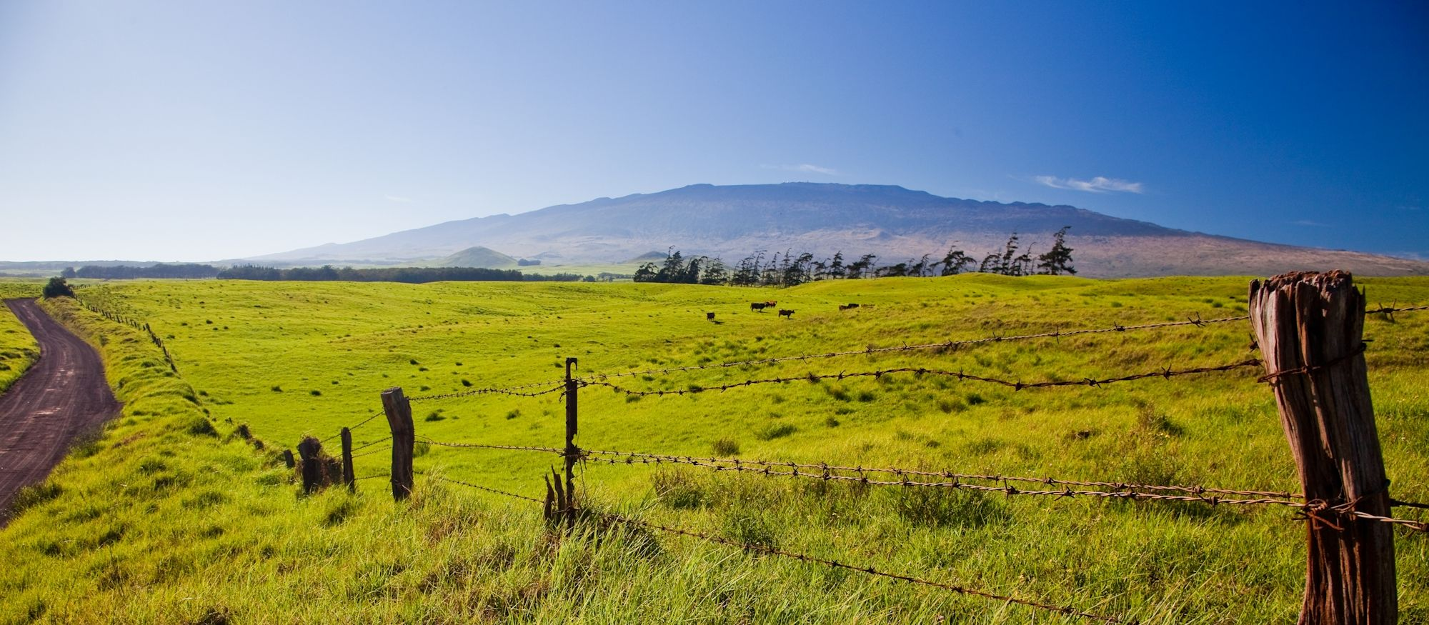 Old fence with Maunakea