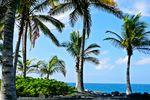 Ein traumhafter Palmenstrand auf Hawaii Island