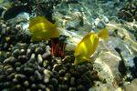 Die farbenreiche Unterwasserwelt von Hawaii Island