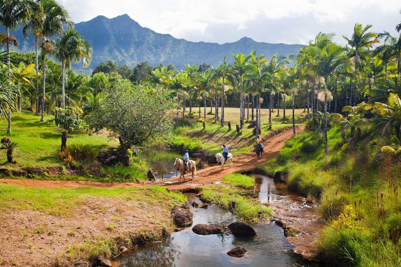 Riding through a palm grove