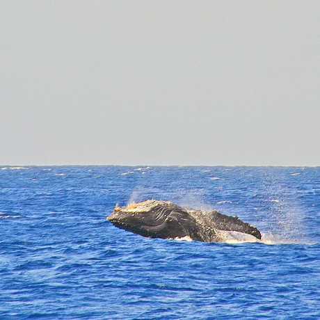 Teralani Sailing - 227 Photos & 294 Reviews - Boating ...