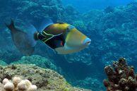 Die farbenfrohe Unterwasserwelt von Maui, Hawaii