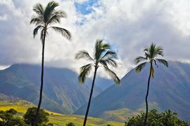 Die Hawaii Insel Maui erleben