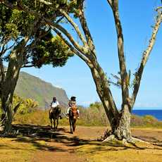 Reiten bei Kalaupapa, Molokai