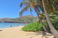 Oahu Pur