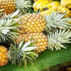 Frische Ananas auf einem Farmers-Market in Honolulu, Oahu