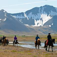 Ausflug mit Islandpferden