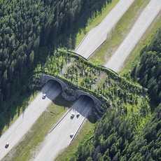 Luftansicht der Wildlife Brücke im Banff National Park, Alberta