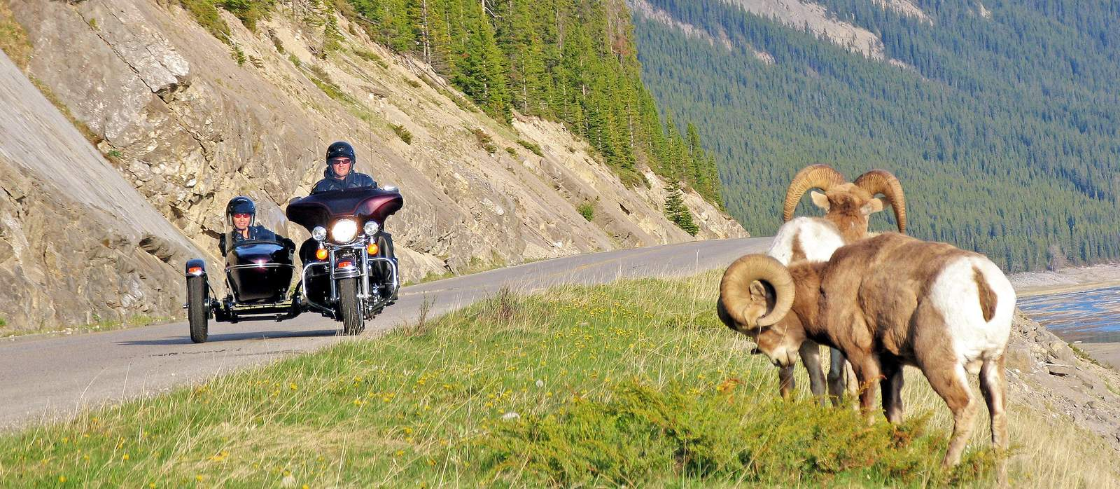 Motorrad mit Beiwagen im Alberta National Park