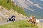 Im Beiwagen die Landschaft von Banff erleben