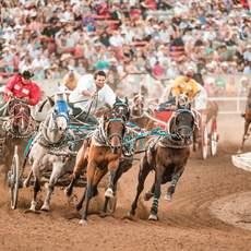 Kutschenrennen auf dem Calgary Stampede in Alberta