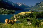 Calgary Landschaft