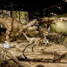 Dinosaurier-Ausstellung im Royal Tyrell Museum