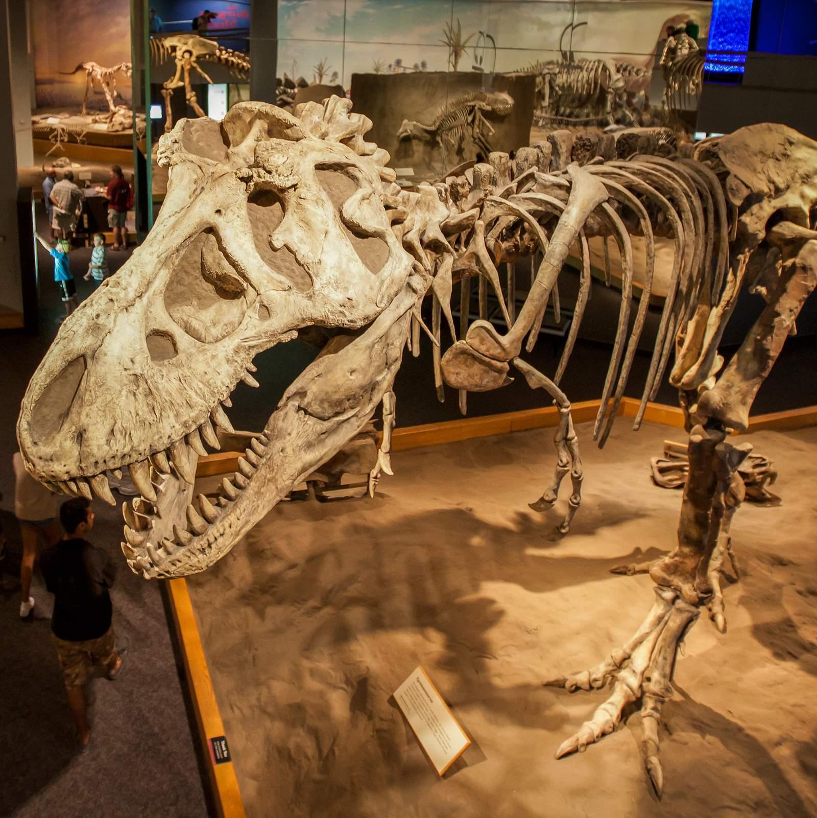 Dinosaurierskelett im Royal Tyrrel Museum