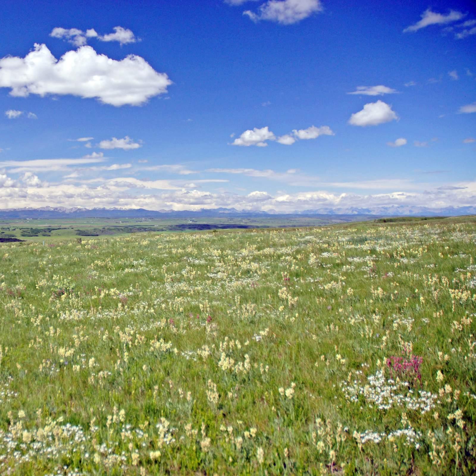 Im Glenbow Ranch Provincial Park
