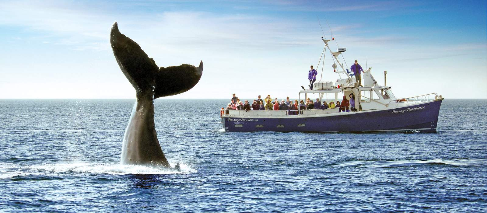 Whalewatching in Atlantikkanada