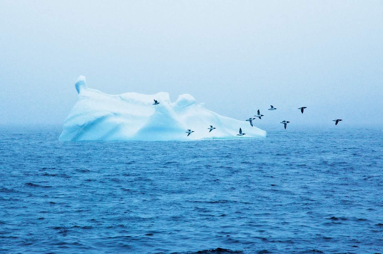 Eisberg mit Seevoegeln