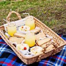 Picknick beim Leuchtturm in Ferryland, Neufundland