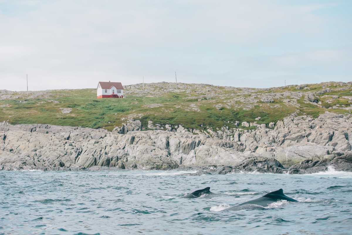Walbeobachtung auf Quirpon Island, Neufundland