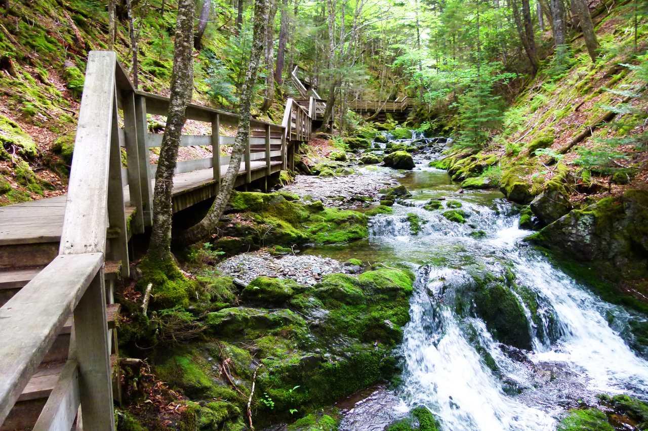 Dickson Falls Wanderweg