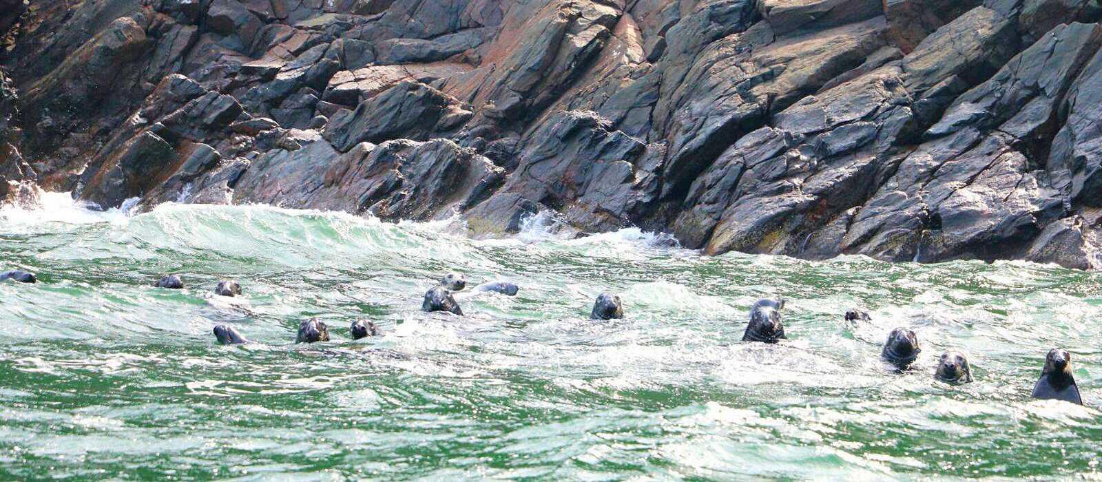 Wale und Robben vor der Küste von Cape Breton
