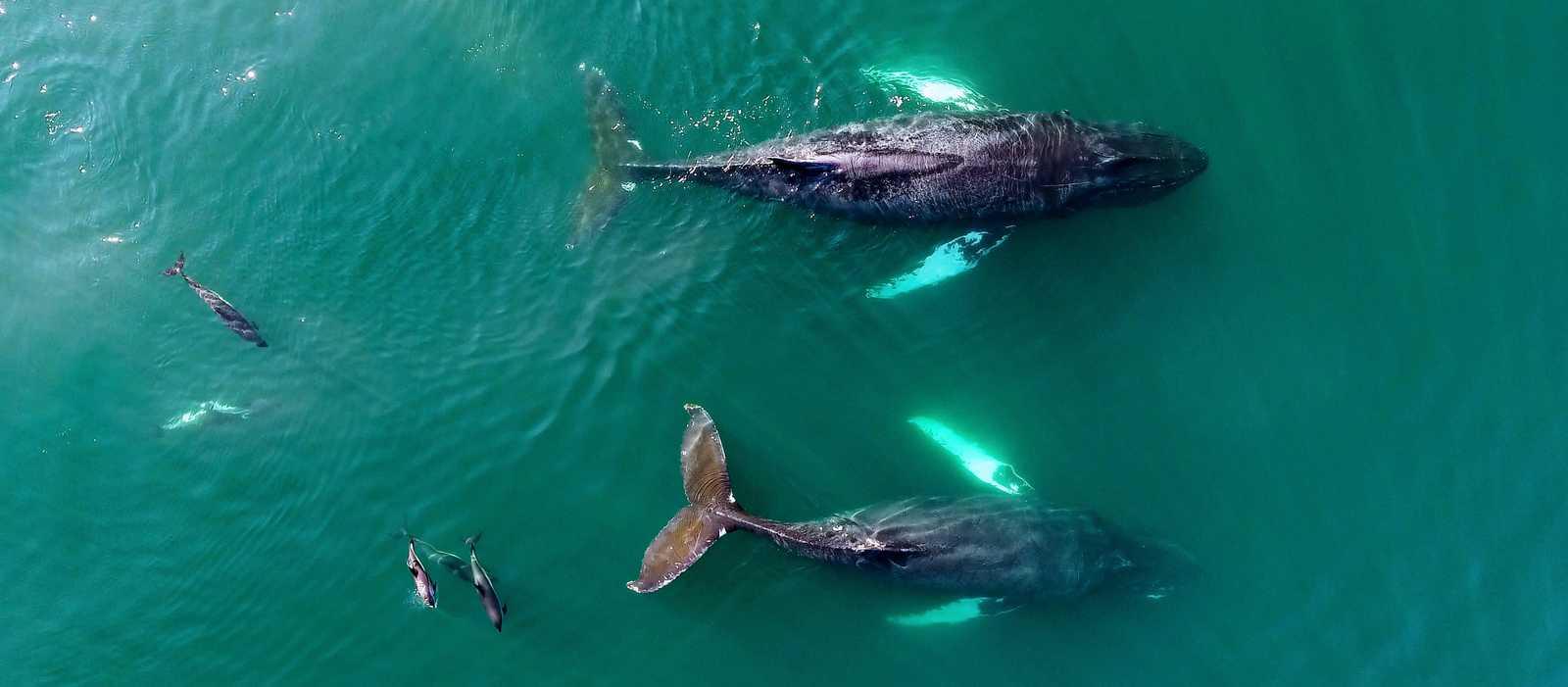 Wale und Delfine an der Küste der kanadischen Provinz Nova Scotia