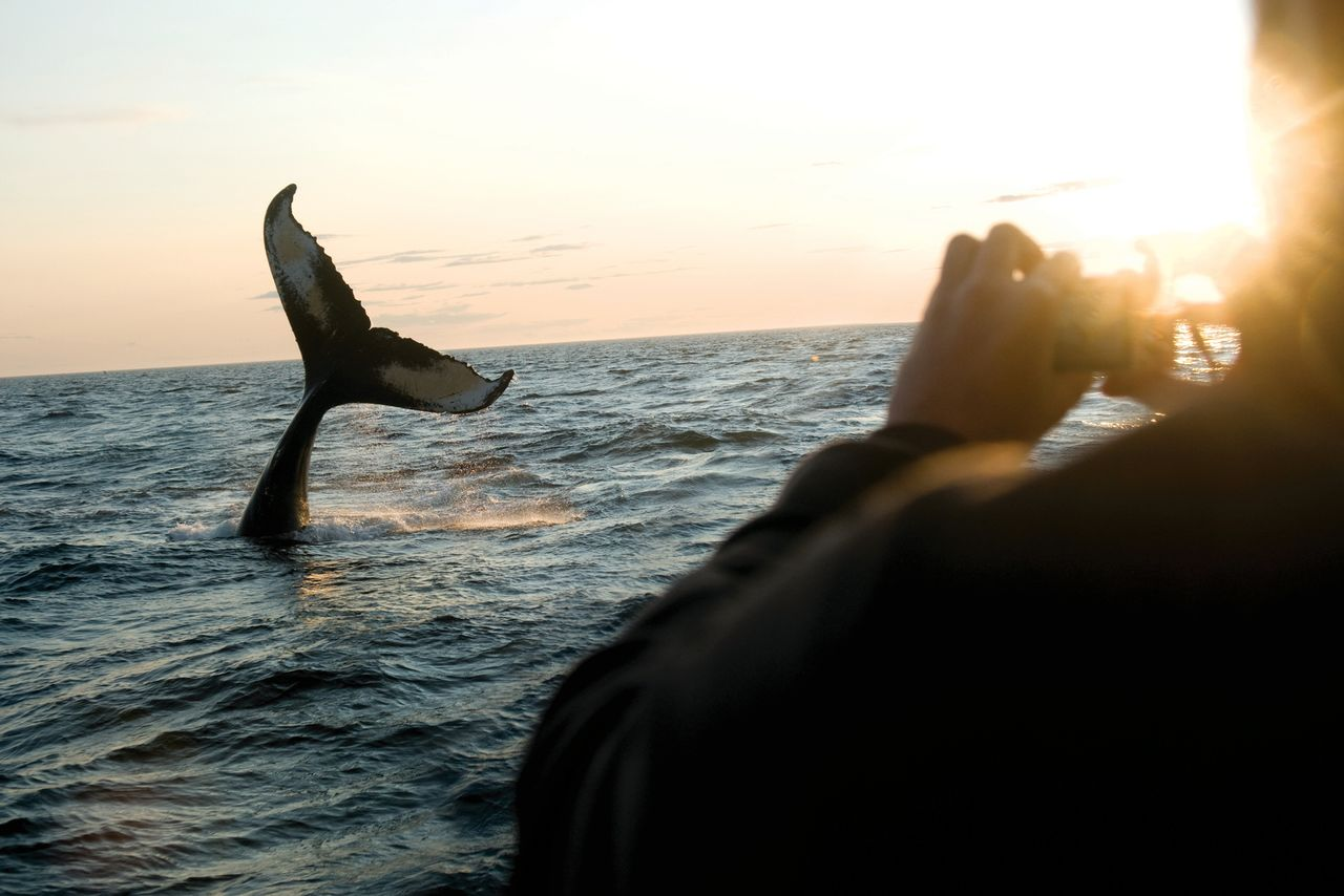 Whale Watching Brier Island