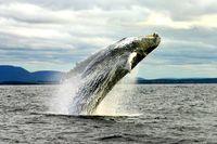 Wale in Atlantik-Kanada '17