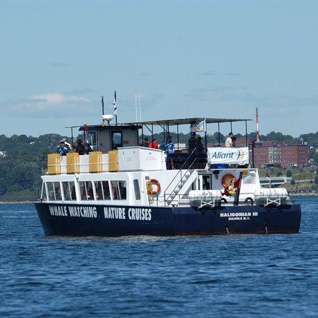 Natur- und Walbeobachtungstour an der Küste vor Halifax