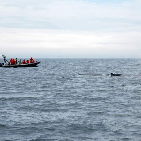 Zodiac Whale Watch Tour in der Bay of Fundy