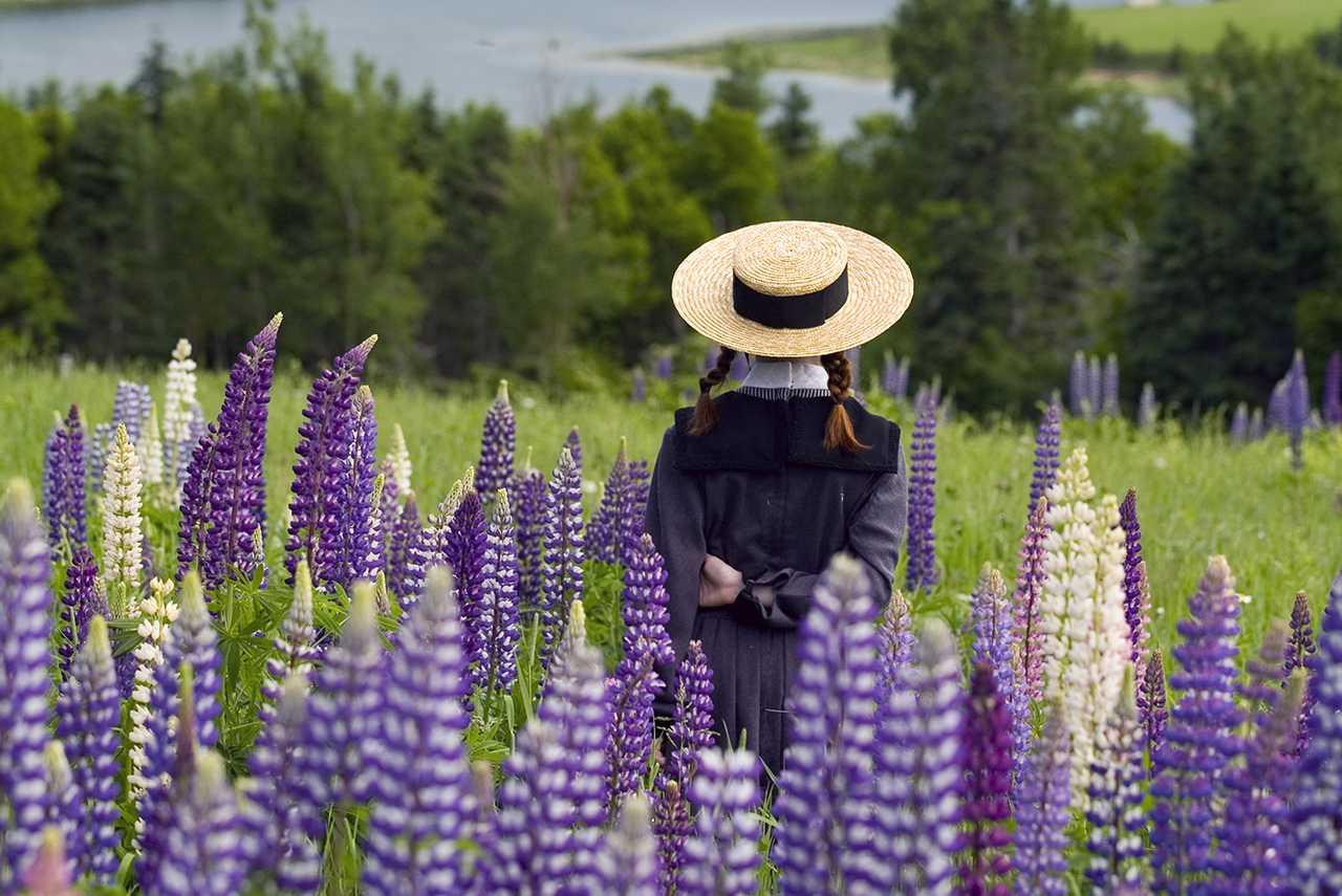 Anne of Green Gabels auf der Blumenwiese
