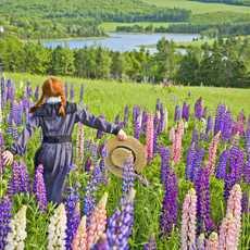 Maedchen rennt durch Blumen