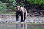 Wildtierbeobachtungen & Eco-Abenteuer