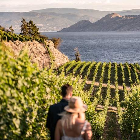 Spaziergang durch die Weinberge im Okanagan Valley, British Columbia;