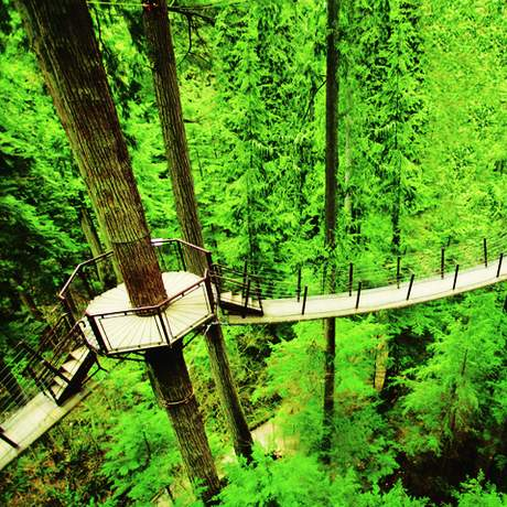 Treetops Adventure im Capilano Suspension Bridge Park in Vancouver, British Columbia