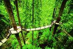 Treetop Adventure an der Capilano Suspension Bridge in Vancouver