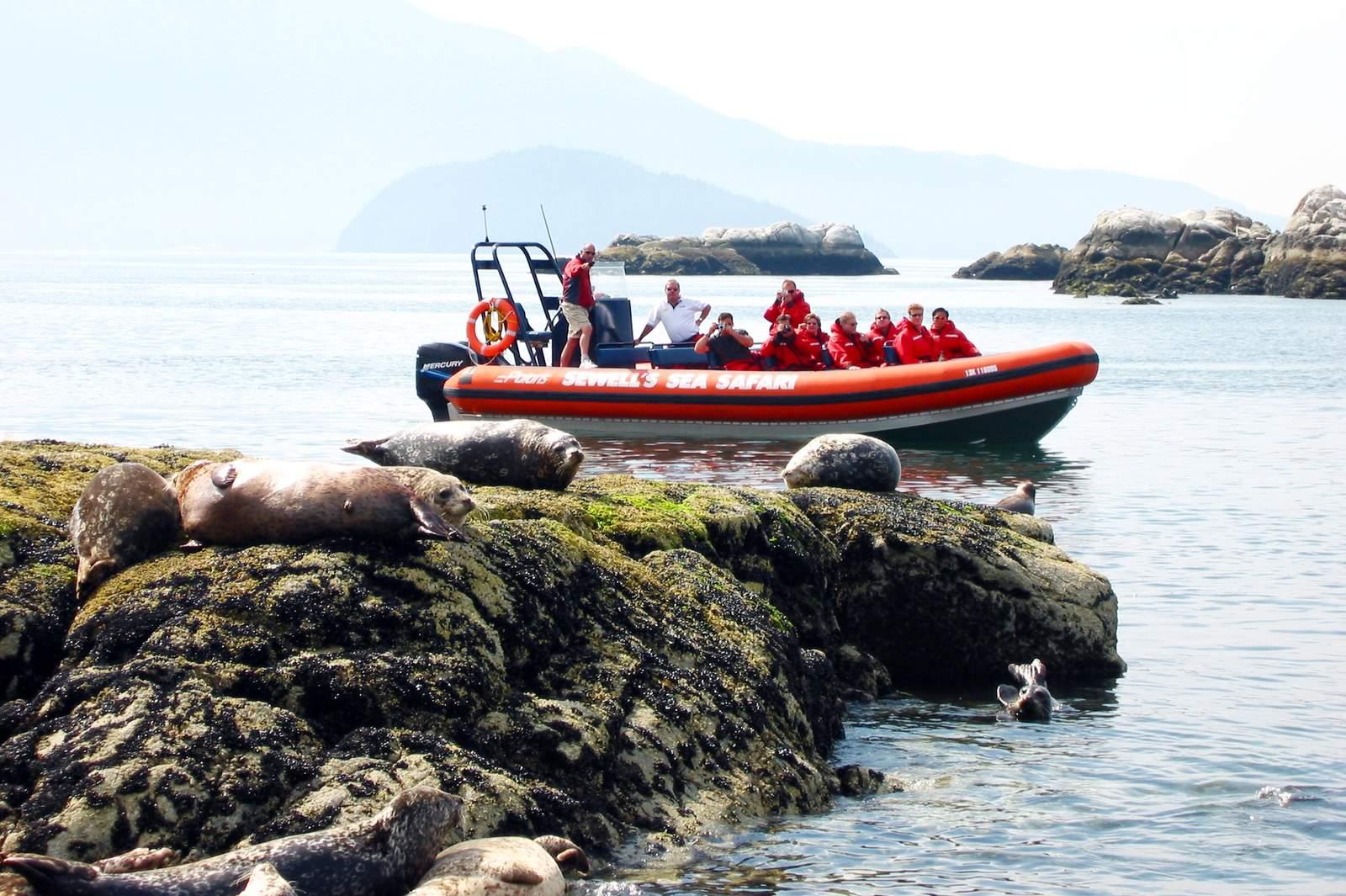 Sea Safari Vancouver