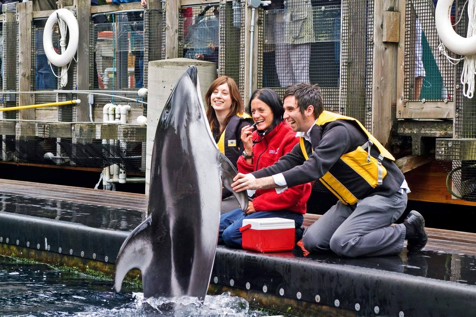 Delfin im Vancouver Aquarium