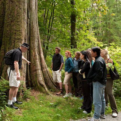 Vanvouver Rockwood Rainforest Adventure